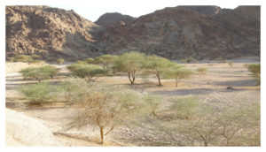 Wadi Jinn